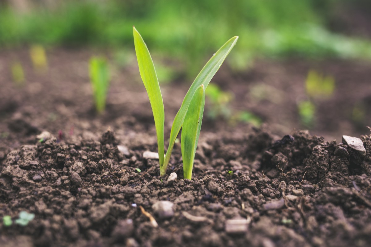 Technology Reshaping The Agriculture Industry