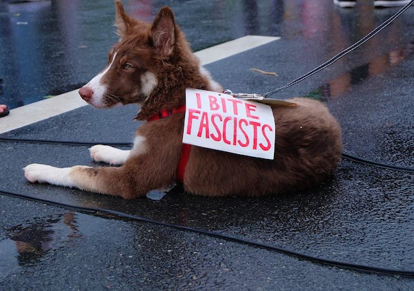 The Goodest Dog is a dog who fights fascism