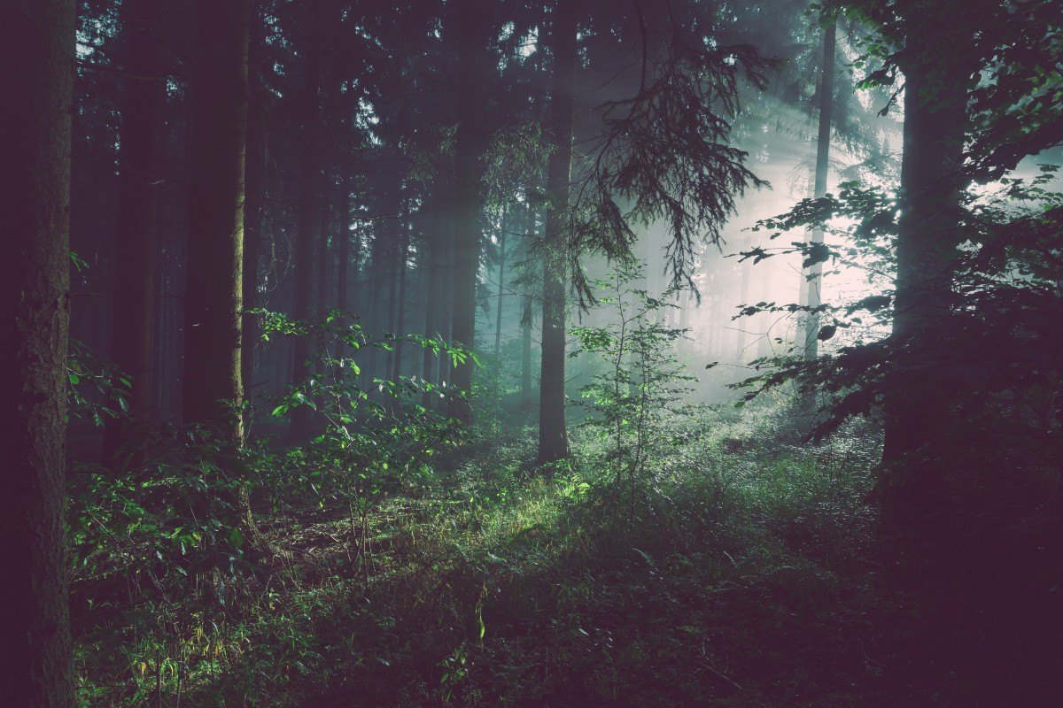 Lost In A Dense Forest: Intuition On Sparsity In Machine Learning With Simple Code!