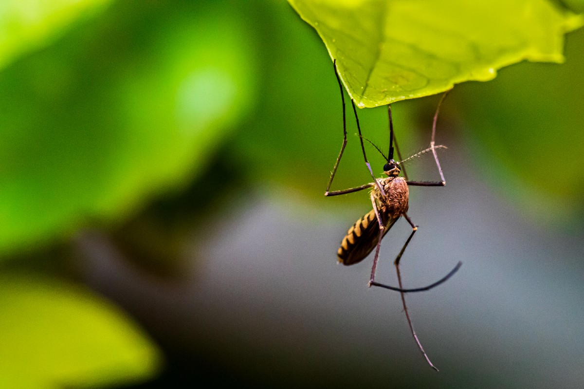 The Path To Stopping Malaria Isn't Exterminating Mosquitoes