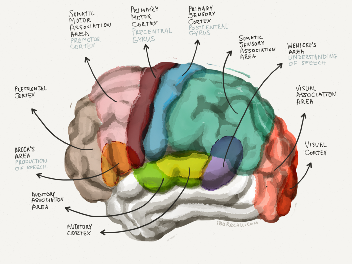 The Neuroscience of Learning & Memory: Part I   by David ...