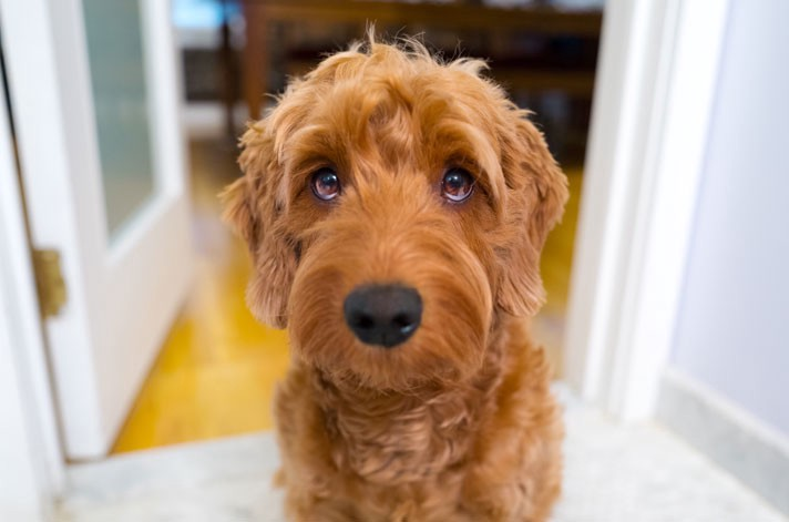 Puppy Dog Eyes for the Smartphone Generation - The Startup