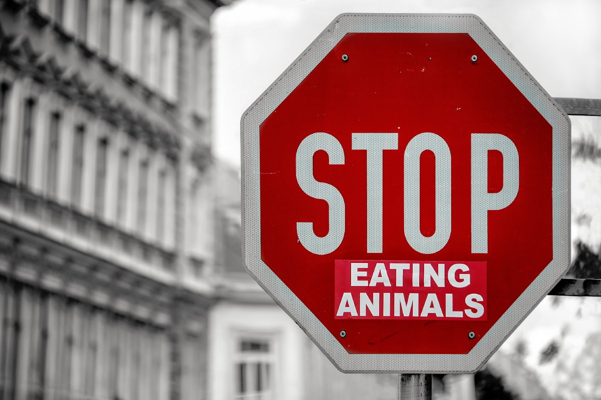 If You Are Not a Vegan, I Have a Simple Question for You: Why Not?