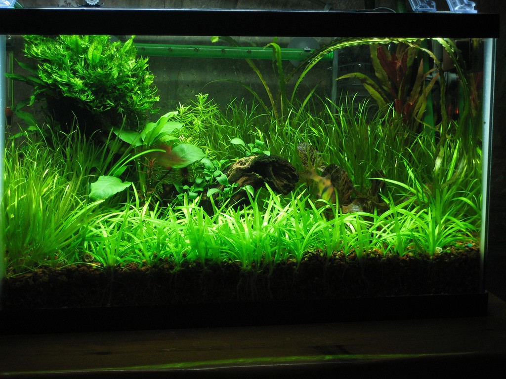 How to tell when CO2 levels are too low in your planted tank?