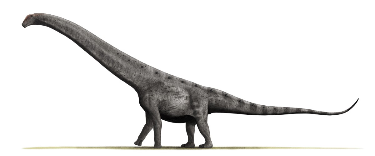 Just How Big Was the Largest Dinosaur? Bigger Than You Think.