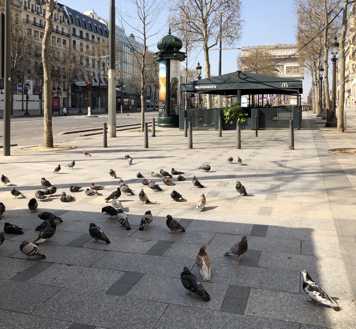 The New Glory Days of the Pigeons of Paris