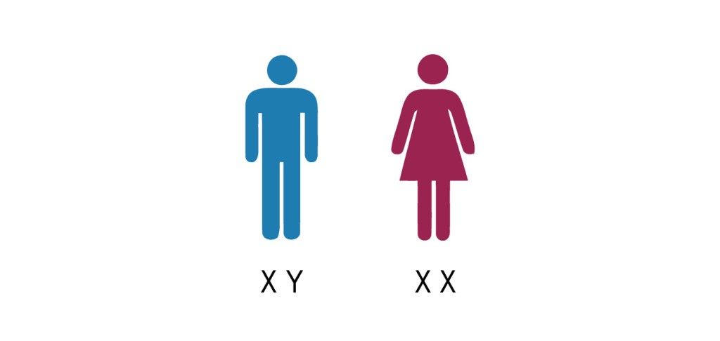 Image result for chromosome xy
