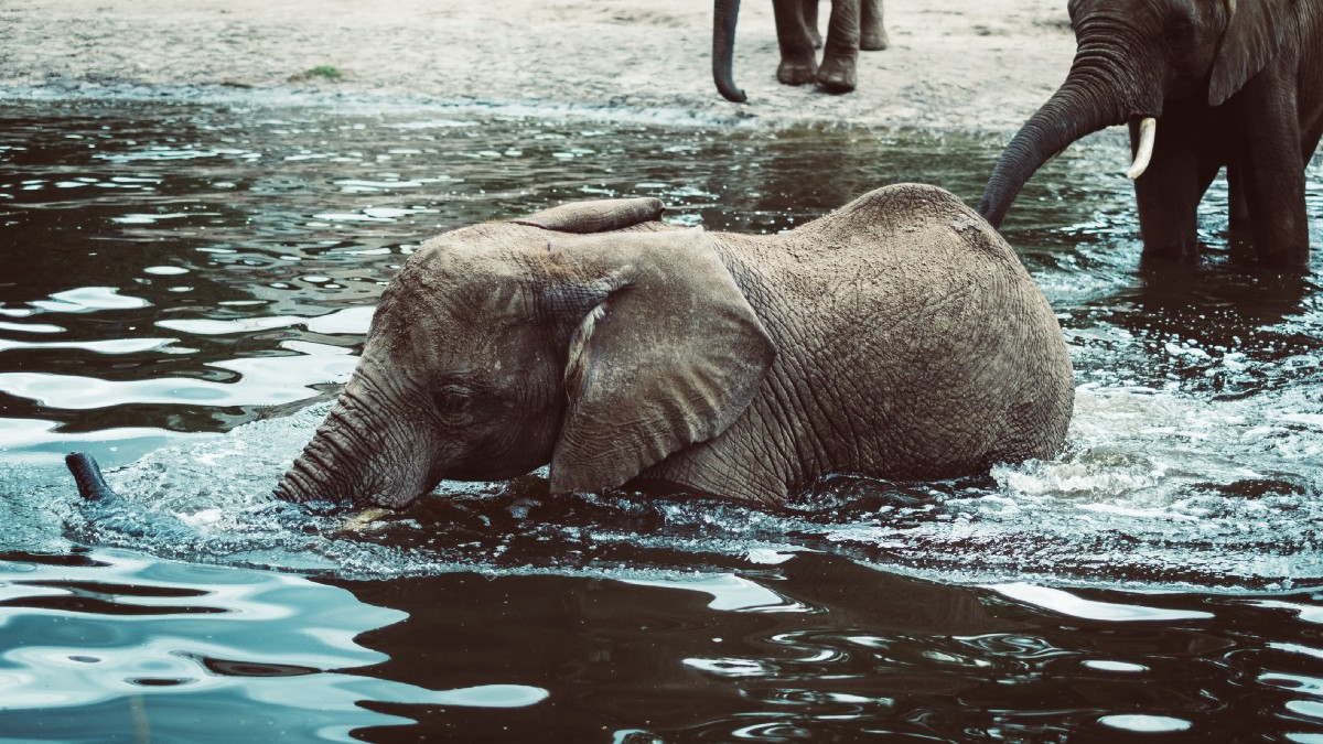 What does an elephant say? - Words for Life - Medium