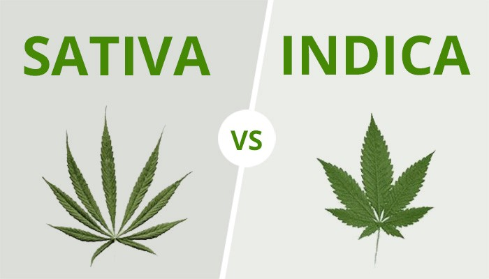 Indica or Sativa Marijuana—Explained