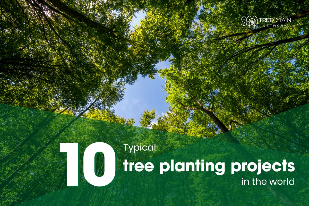 10 typical tree planting projects in the world | by ...