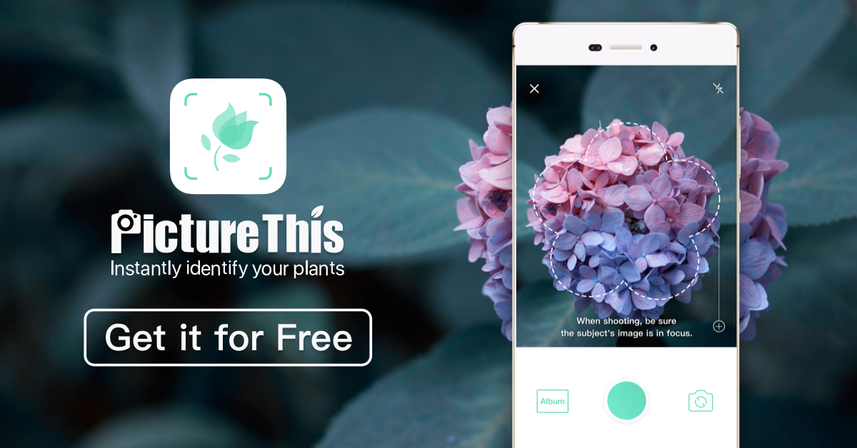 Coders Corner: PictureThis is an app that will help you identify