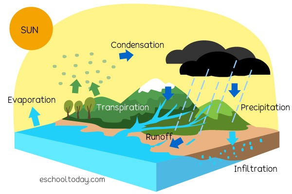 A simplified diagram of the water cycle. Evaporation moves water from the ocean to the air. Transpiration moves water from plants to the air. Condensation moves water from the air into clouds. Precipitation moves water from clouds to the ground as rain. Infiltration moves water from the surface of the ground to underground. Runoff moves water from the surface of the ground into the ocean.