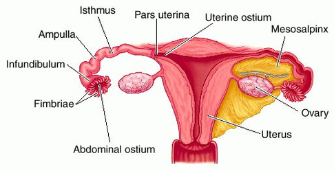 is it possible to get pregnant without a uterus? - camila s  espinoza -  medium