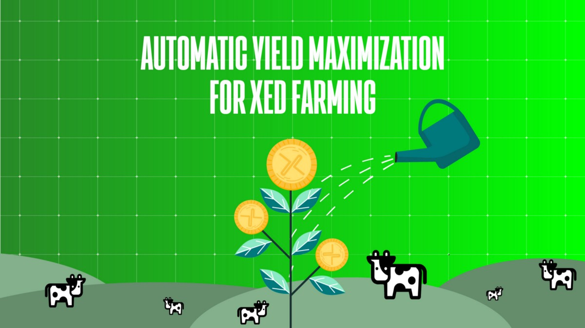 Farm XED automatically with Beefy.finance