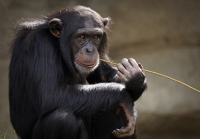 Animals in Captivity: Are Zoos Good or Bad? - Bethany Ivy