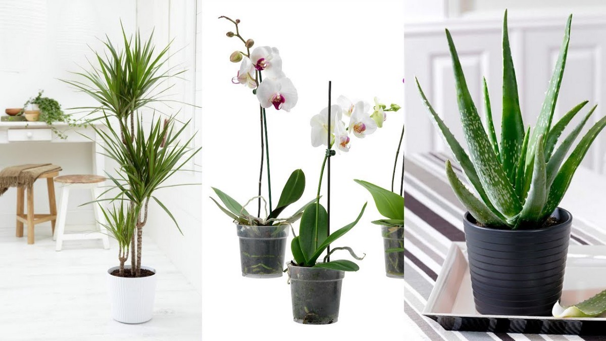 Top 10 Amazing Houseplants To De-Stress Your Home And Purify The Air: Plants