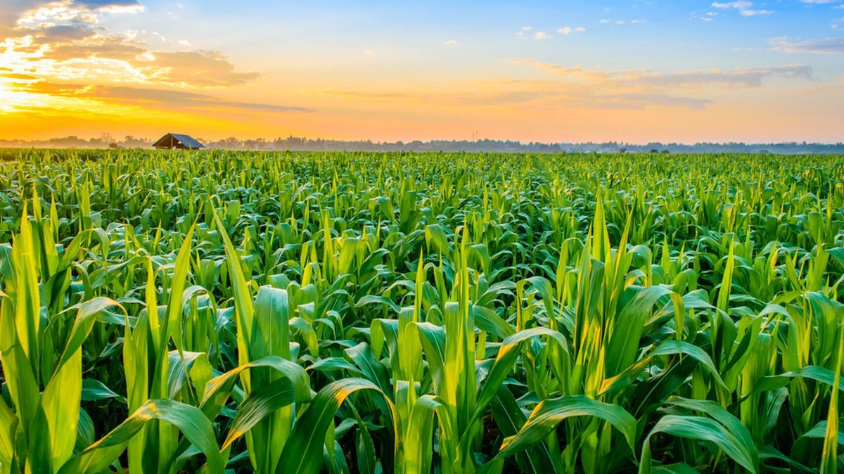 Technology Trends In The Field Of Agriculture