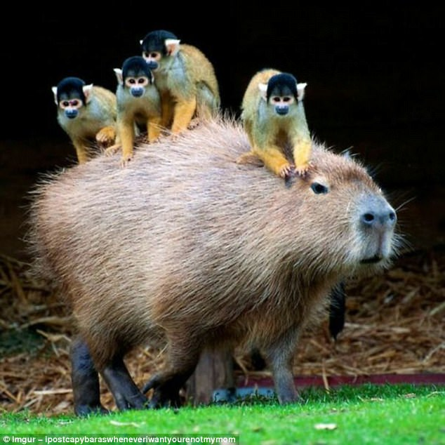 Testing Your App In The Browser With Capybara (Rails Backend, React