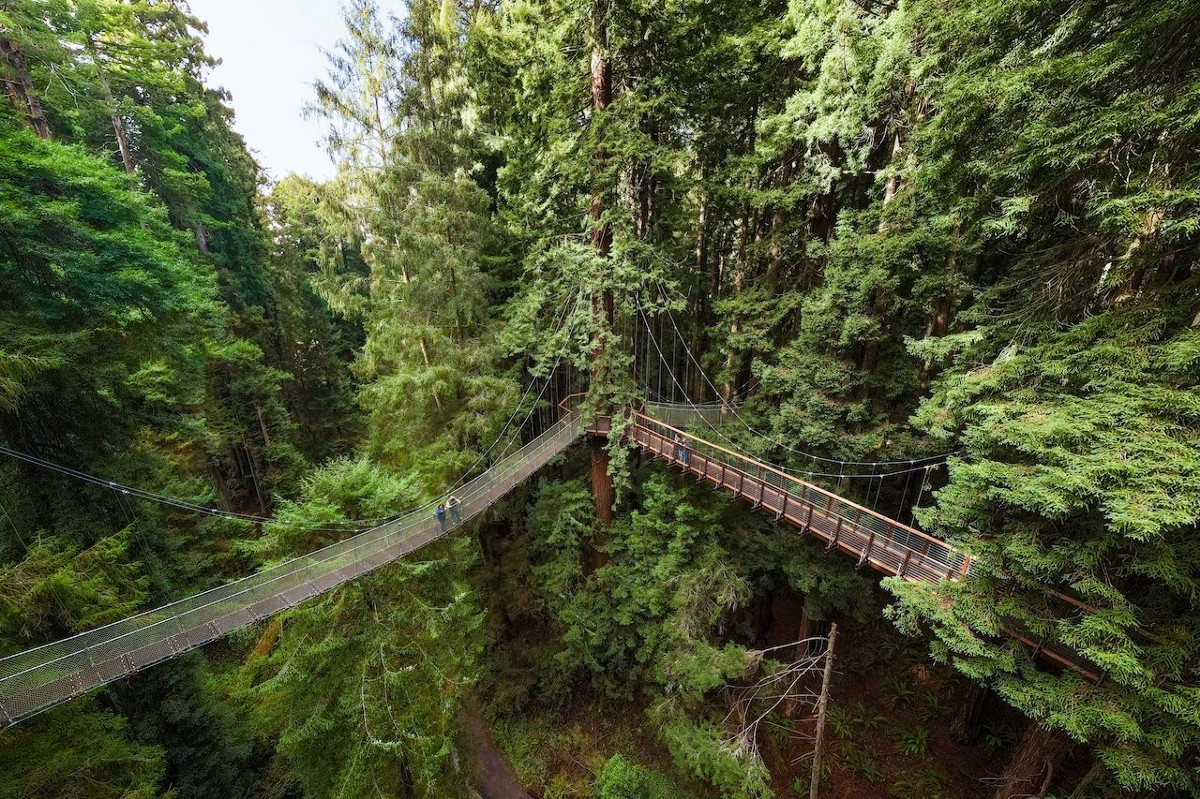 A Skywalk Just Opened Up That Goes 100 Feet Above the Sequoia Redwoods