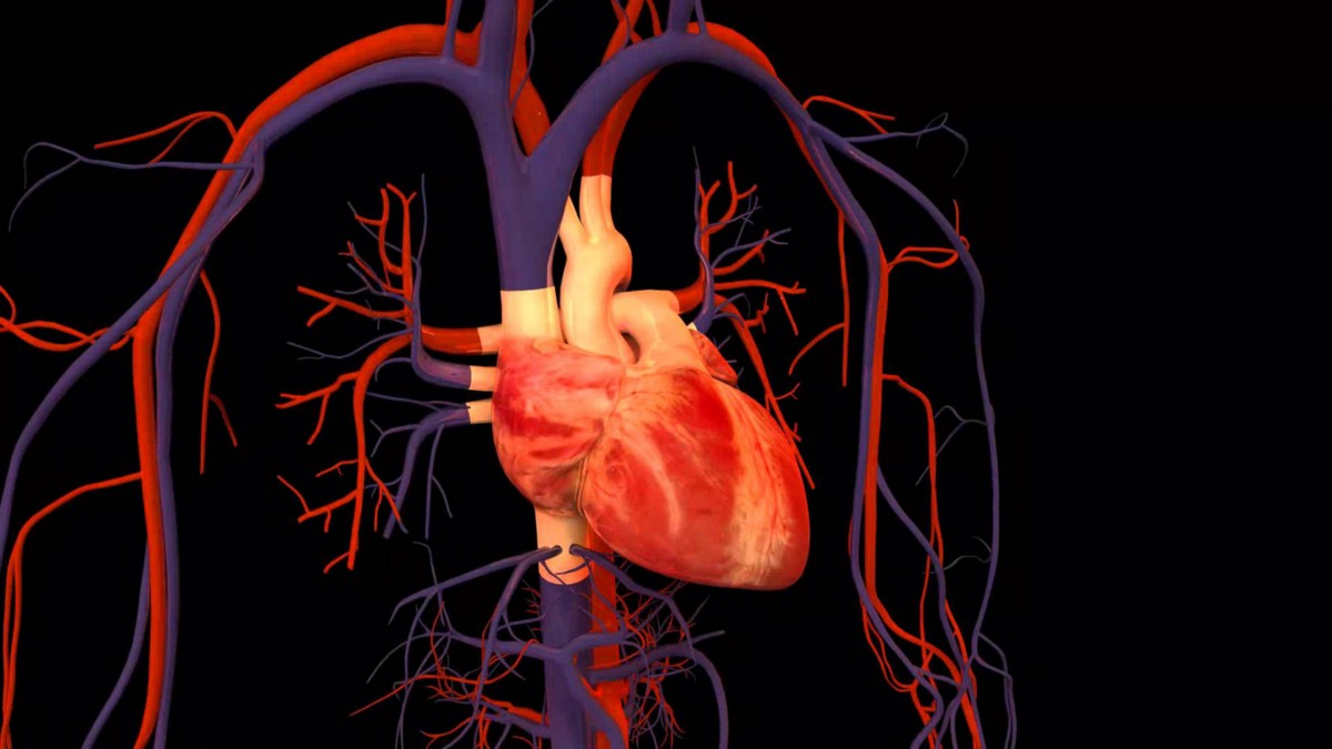 Predicting Heart Failure Survival with Machine Learning Models