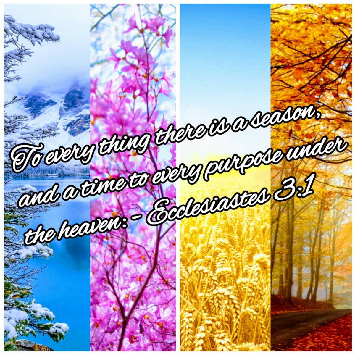 To everything, there is a season, and a time to every ...