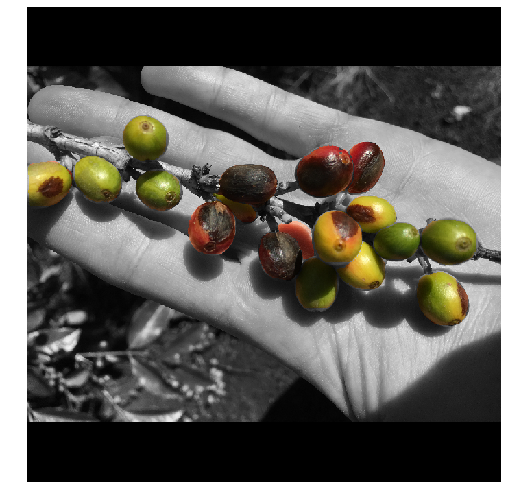 Using Deep Learning to Estimate Coffee Harvest Yields