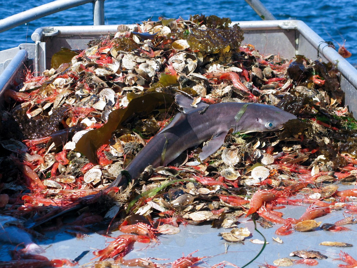 Why Wild-Caught Shrimp Aren't as Innocent as You Think