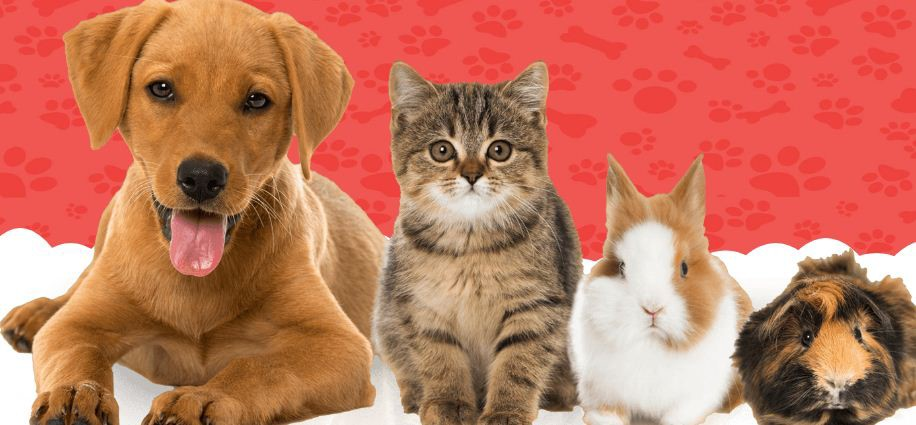 Pet Care Clinic -ask a vet online - best veterinarian - Medium