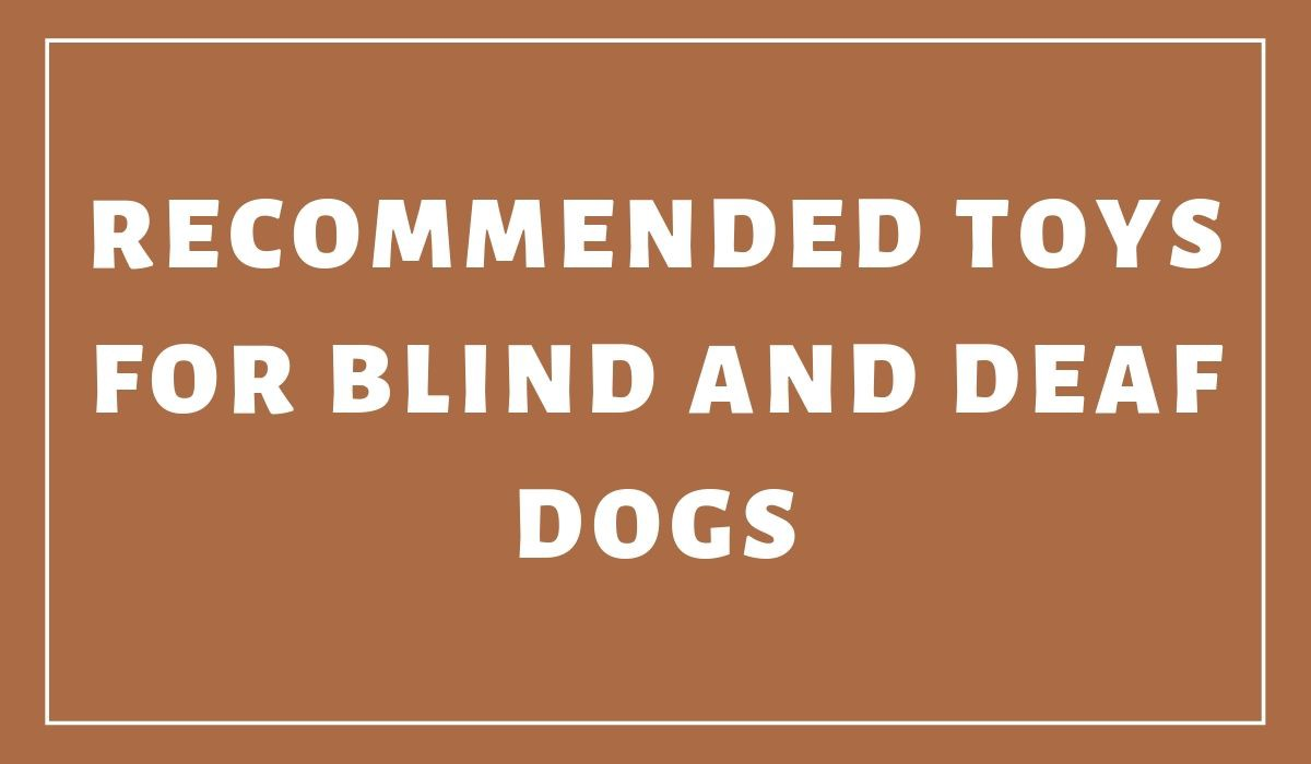 Toys For Blind And Deaf Dogs