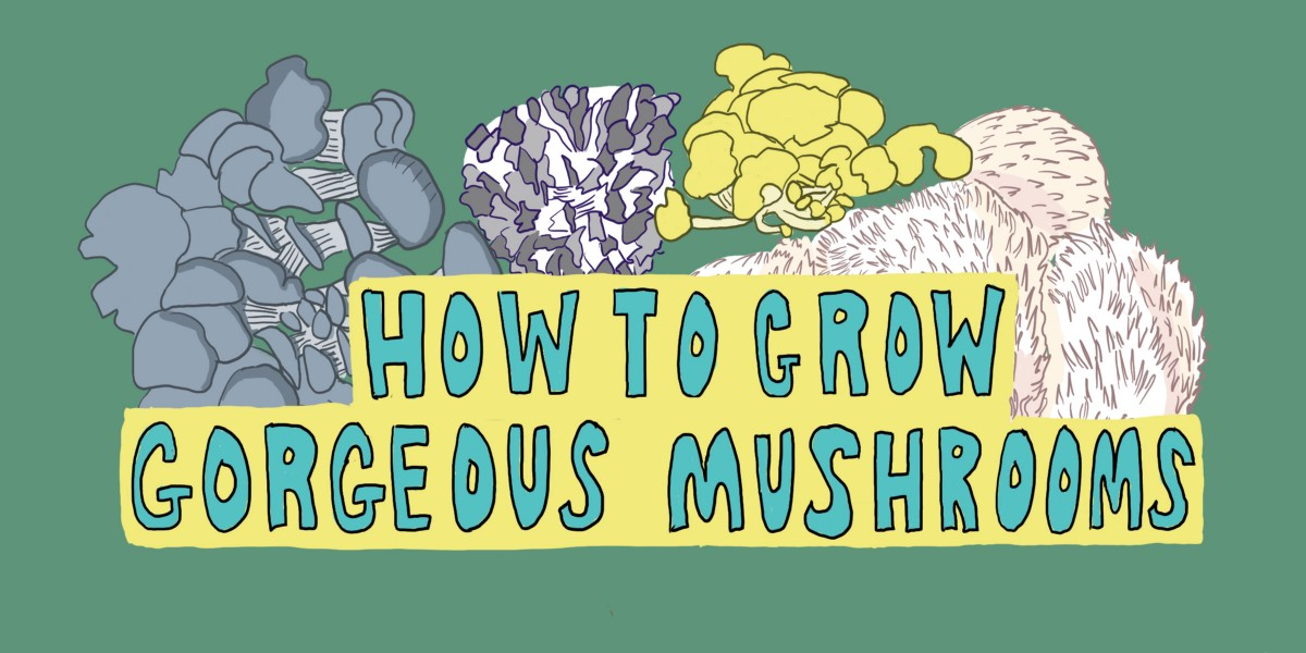How to Grow Gorgeous Mushrooms - Tenderly