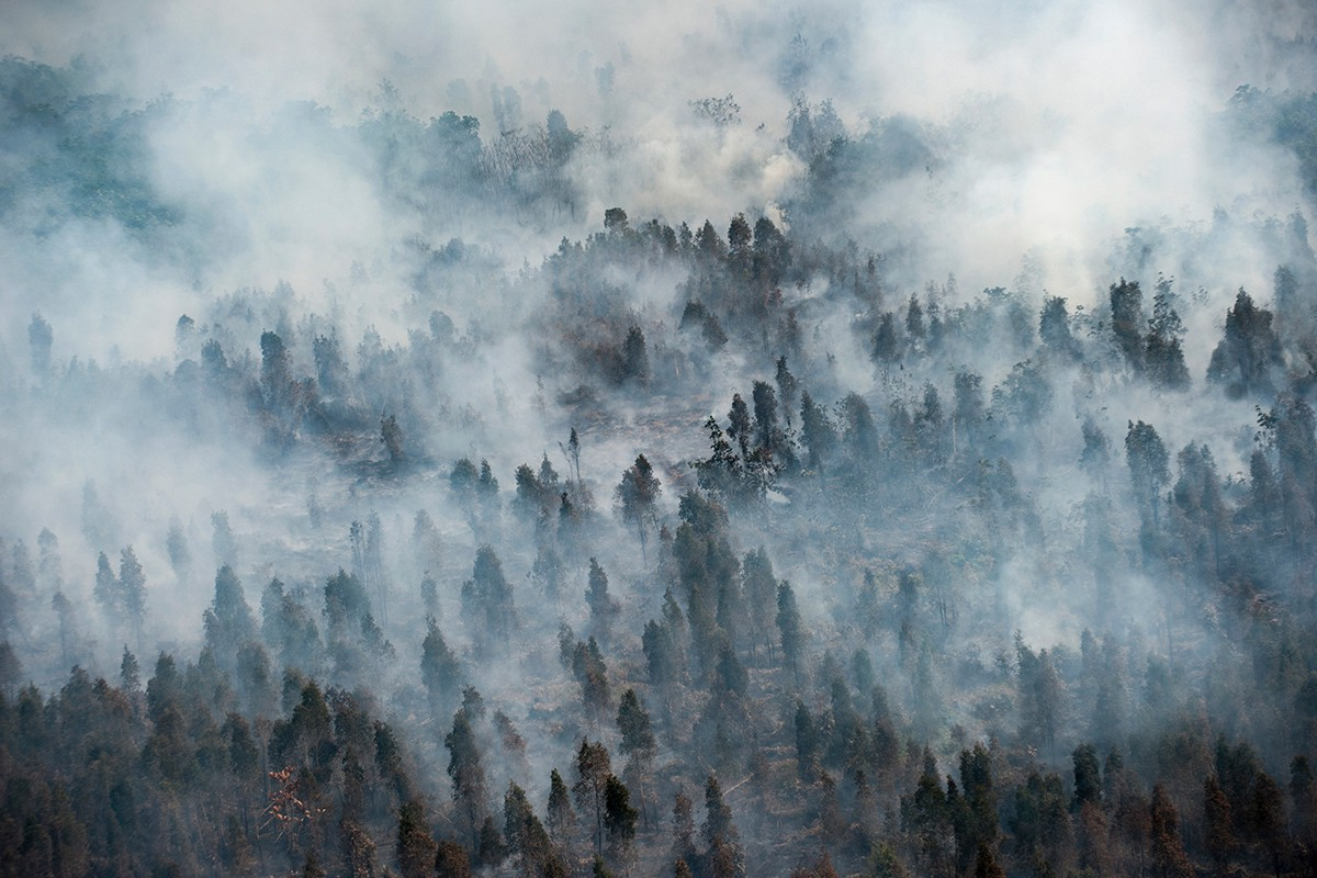 Image result for burning forests indonesia