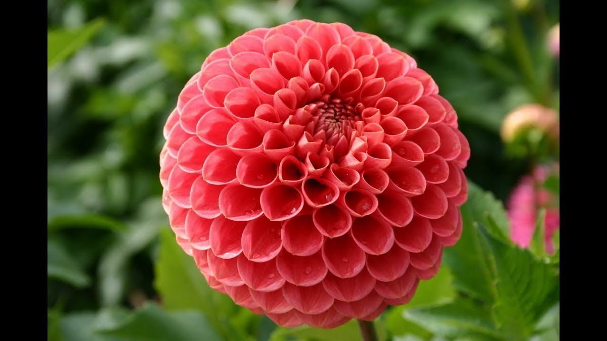 9 Most Expensive Flowers On The Planet By Flowers N Fruits Medium