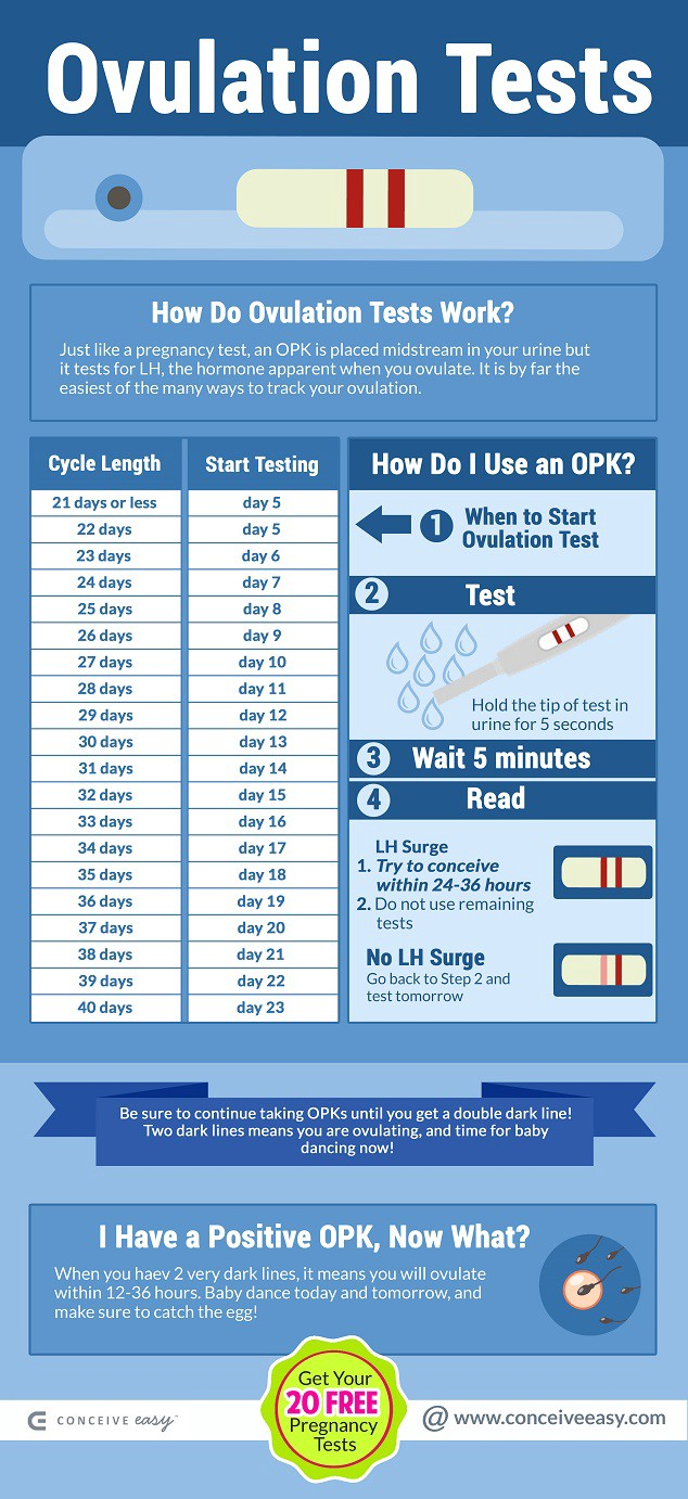 When do I Take an Ovulation Test Infographic - Conceive Easy