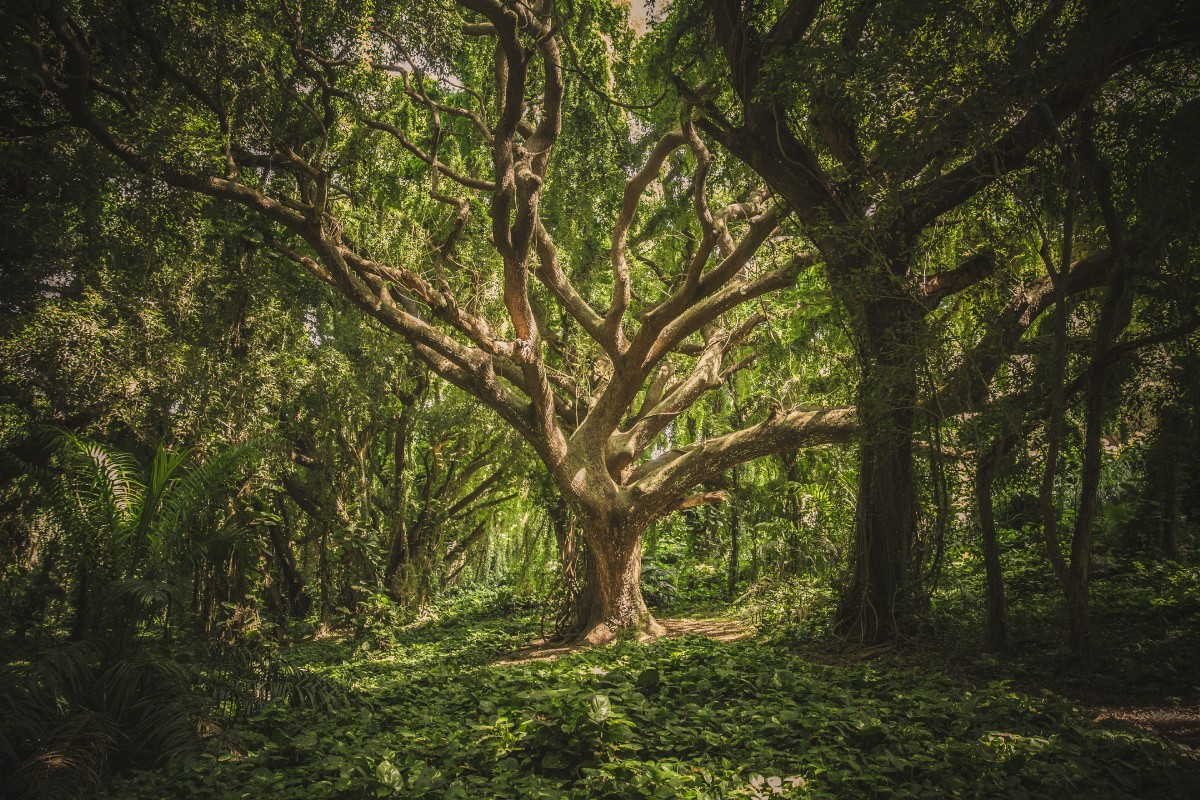 Random Forest: Hyperparameters and how to fine-tune them