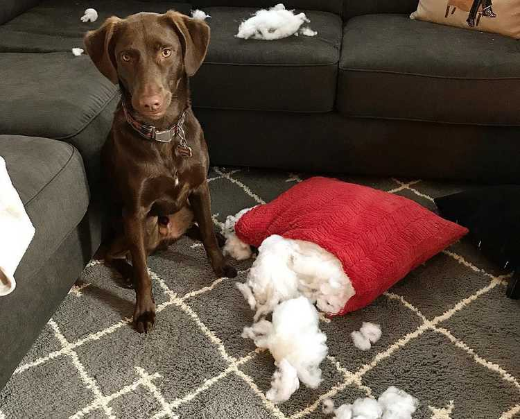 Tips to Stop your Dog Chewing Furniture When you Leave the House