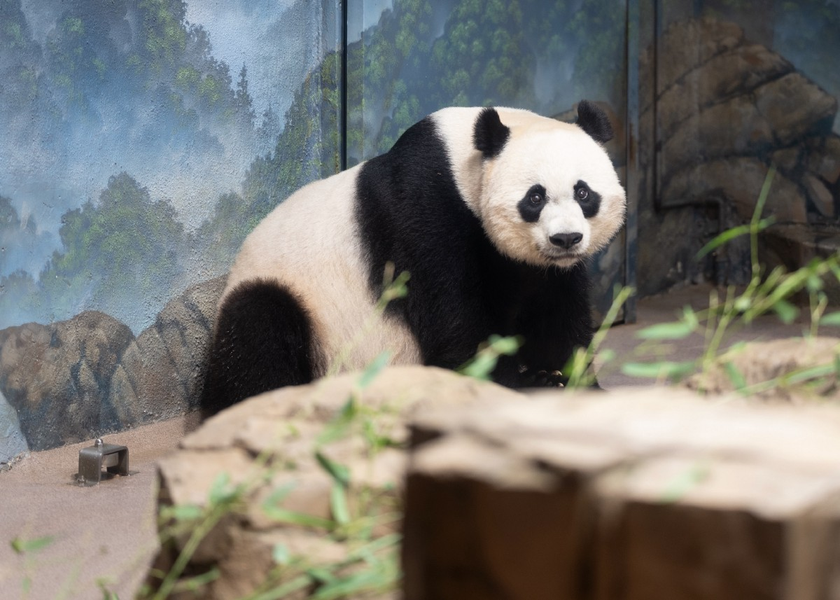 Learning the Pandas Library from Scratch