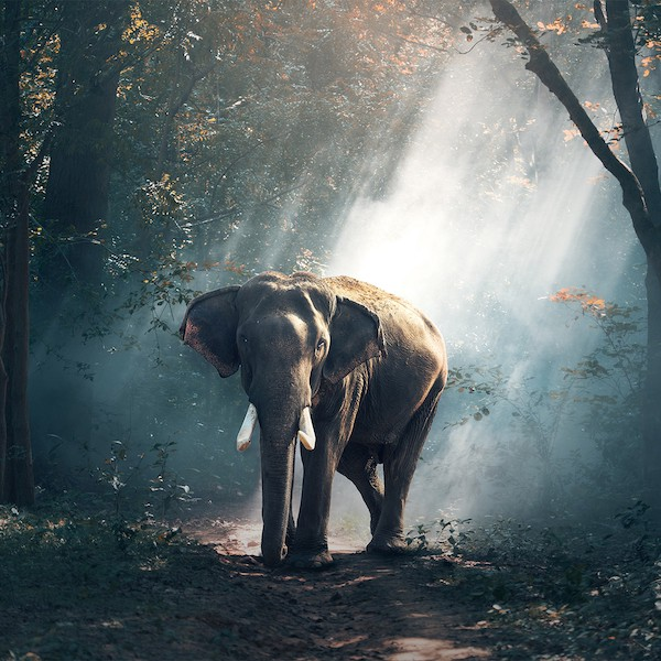 Elephant-sized companies have particular challenges changing direction.