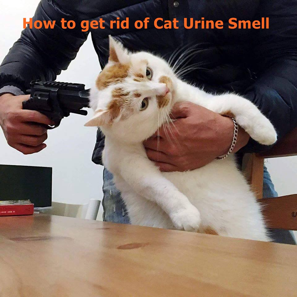 Get Rid Of Cat Urine Smell Outside