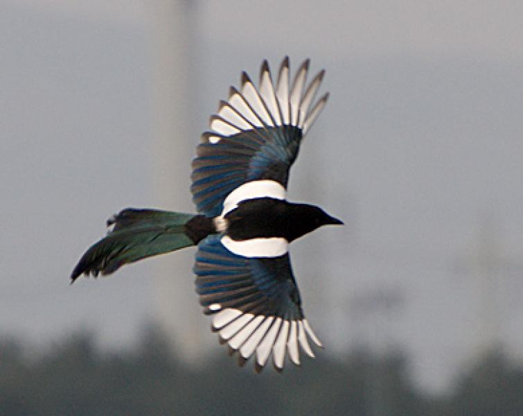 Amsterblog: birds of the Netherlands, ranked according to me