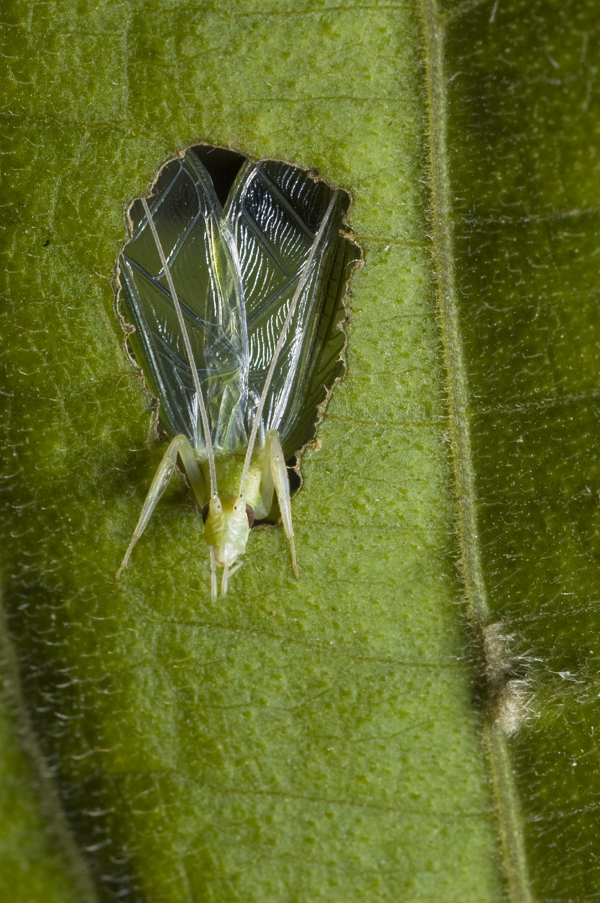 How to make the perfect baffle — an insect's guide - Life on Earth