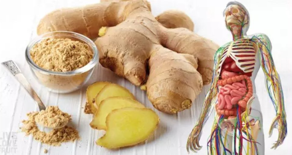 10 Scientifically Backed Reasons Why You Should Consume Ginger Everyday
