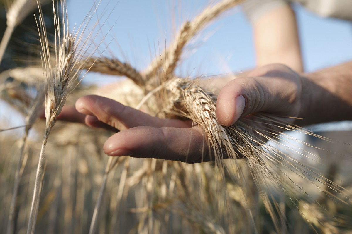 The Problem Isn't Wheat. It's What We've Done to It
