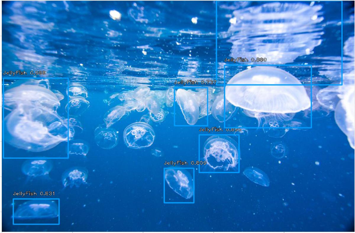 Object Detection for JellyFish using small dataset and RetinaNet
