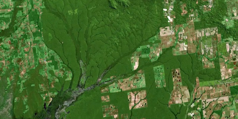 A glimpse at Brazil reveals the big REDD problems that California's