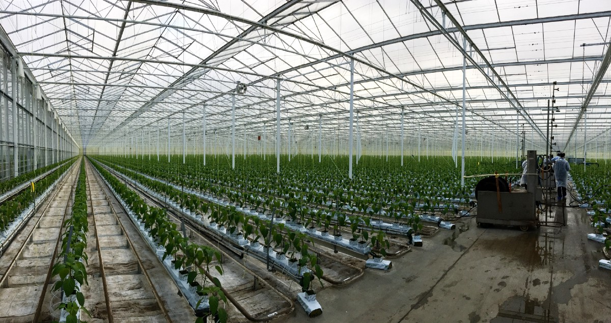 Yes, Indoor Agriculture Can Feed the World