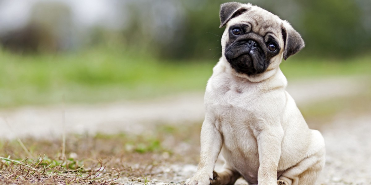 Getting started with Pug template engine - codeburst
