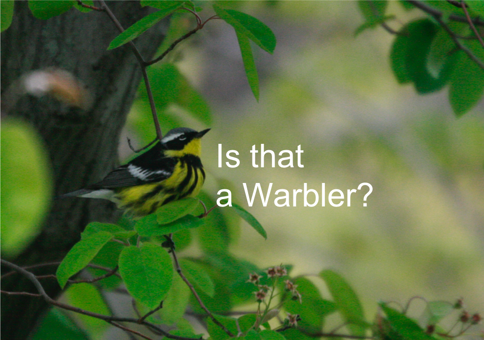 Is that a warbler? Bird classification with Keras CNN in Python