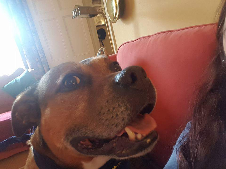 What I Know About Staffies - Alice Bonasio - Medium