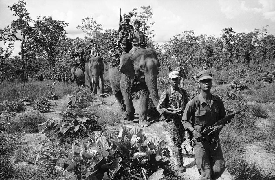 Battle of the Dumbos: Elephant Warfare From Ancient Greece to the VietnamWar
