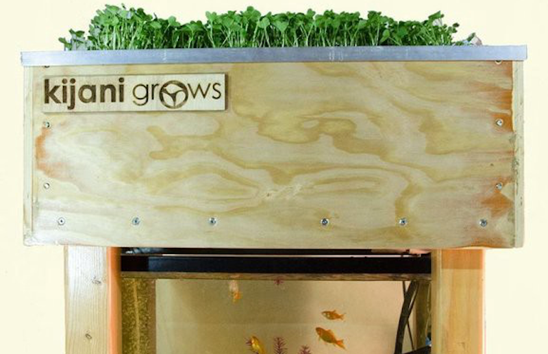 This Guide Details How to Build a Sustainable Smart Aquaponic Garden